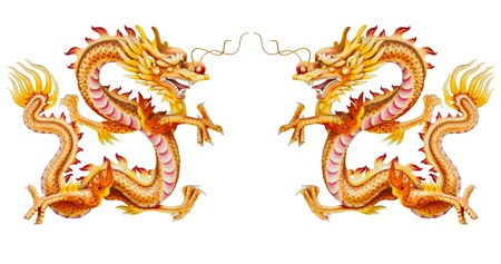 Twin golden dragon statues on white background with reflection