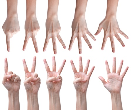 Counting hands isolated on white Stock Photo - 11198632