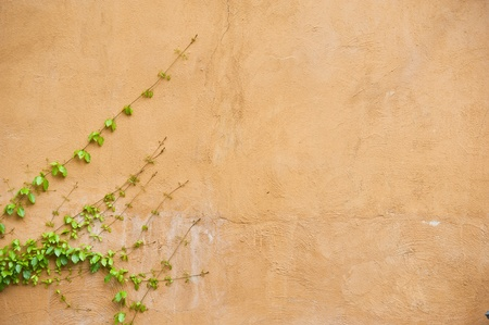 green leaves on yellow wall  photo
