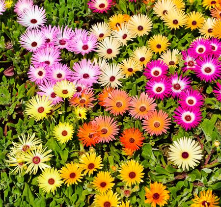 garden flower: flower in garden