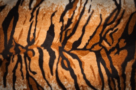 tiger fur texture photo