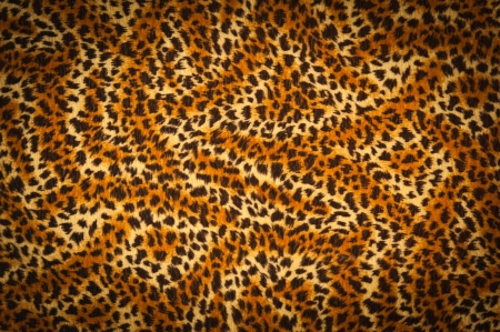yellow tigers: tiger fur texture