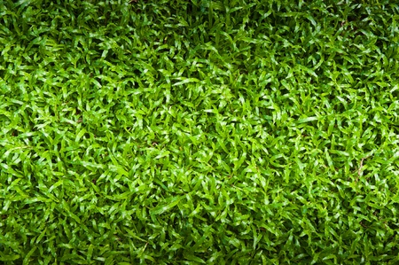 Green grass surface Stock Photo - 12605781