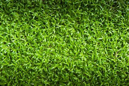 Green grass surface Stock Photo - 12605781