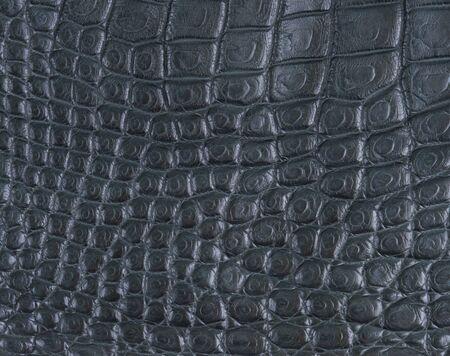 crocodile belly skin texture background photo