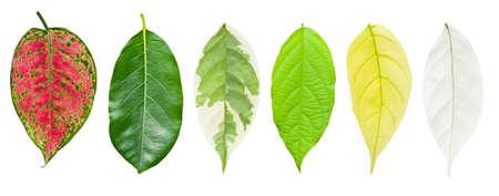 Set of leaf isolated on white Stock Photo - 13843524