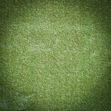 Green grass surface Stock Photo - 14381567