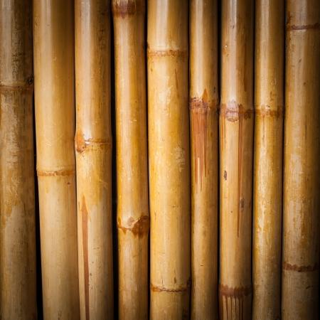 Bamboo texture photo