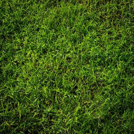Green grass surface Stock Photo - 15797542