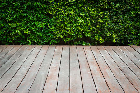 wooden floor with green plant background Stock Photo - 15797529
