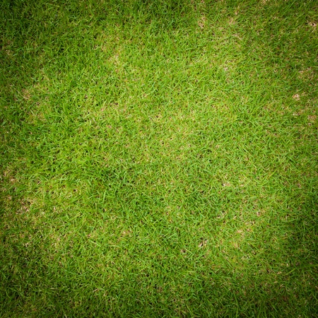 Green grass surface Stock Photo - 15829002