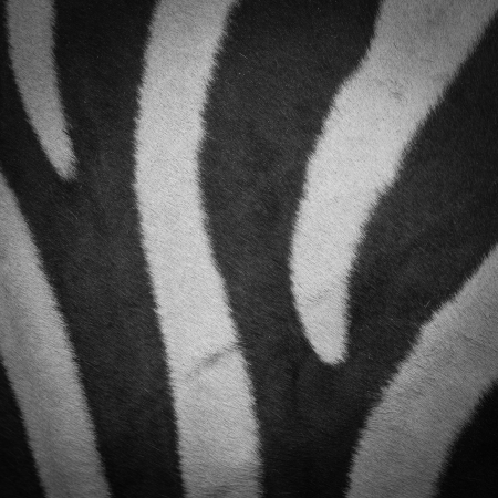 zebra pattern with black and white stripes photo