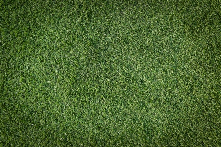 Green grass surface Stock Photo - 17947399