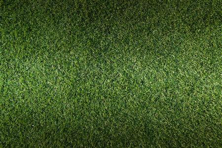 Green grass surface Stock Photo - 17947400
