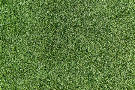 Green grass surface Stock Photo - 17947397
