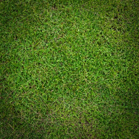 Green grass background Stock Photo - 18701842
