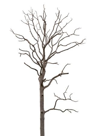 arboles secos: Árbol muerto y seco aislado sobre fondo blanco Foto de archivo