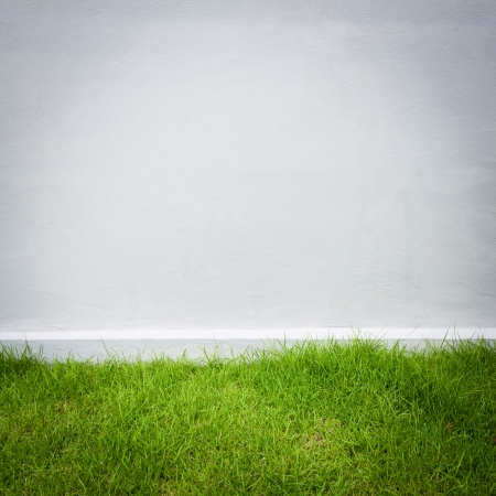 white wall and green grass background Stock Photo - 21156805
