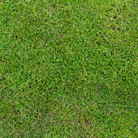 Green grass background Stock Photo - 21160507