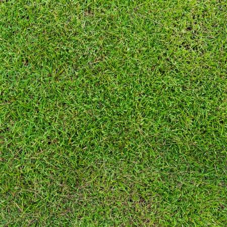Green grass background Stock Photo - 21160507