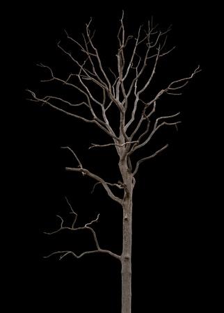 albero secco: Albero morto e secco � isolato su sfondo nero