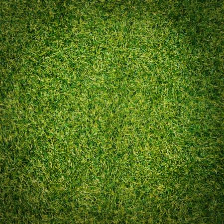 Green grass surface Stock Photo - 21231135