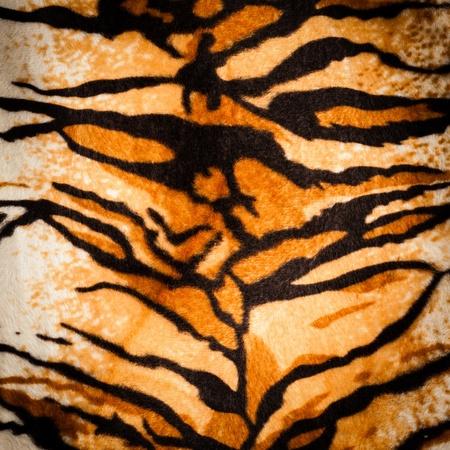 tiger skin: tiger fur texture