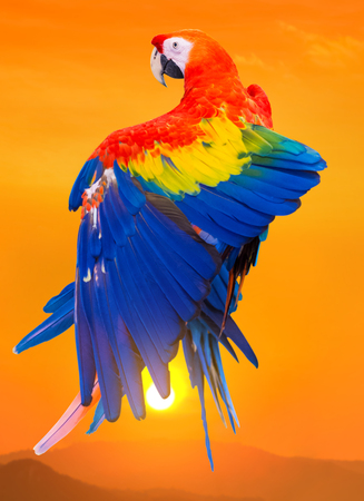 parrot with sunset background
