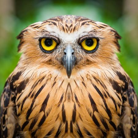 Owl face close up Imagens