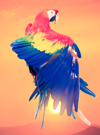 parrot with sunset background - retro vintage filter effect