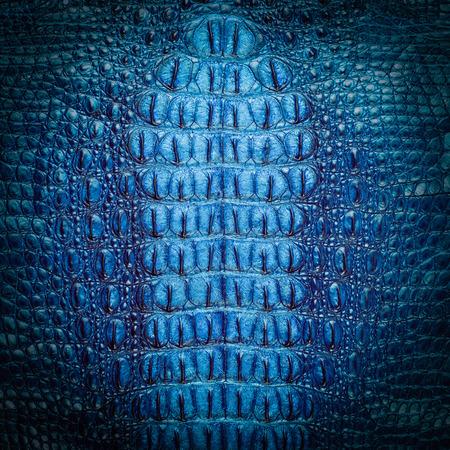 Freshwater crocodile blue bone skin texture