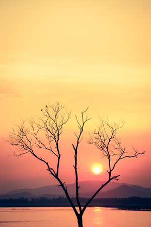 sunset with dead tree - retro vintage filter effect