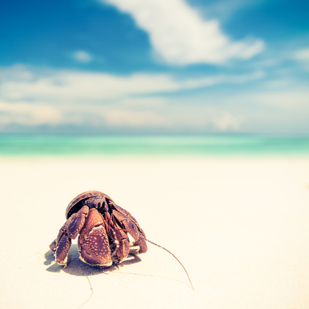 Hermit crab on beach with sky, retro vintage filter effect