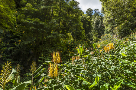emergence: Wild flowers in the Azores, Portugal