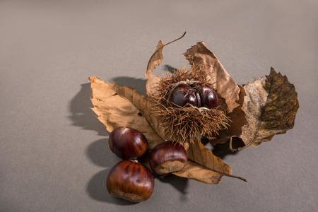 dark: Chestnuts on dark table Stock Photo