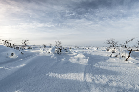 the silence of the world: Bare trees on snowcapped landscape