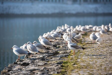 View of seagulls perching on pier