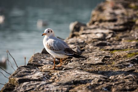 Seagull perching on pier
