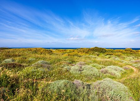 Wild vegetation in spring near the beach of Lampianu, Stintino, Sardinia Imagens