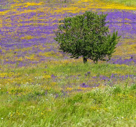 Beautiful landscape with lone tree stands in a green field with yellow daisies and purple flowers