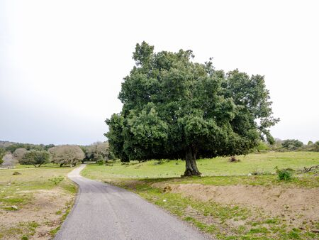 Mountain landscape and vegetation along Road SP27 in Ogliastra, Sardinia, Italy Stock fotó