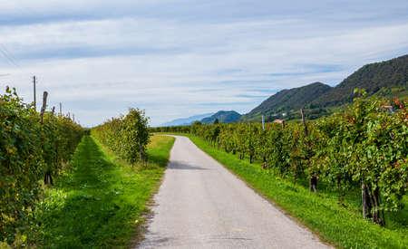 Road in the vineyards leading to a village of Valdobbiadene, Veneto, Northern Italy