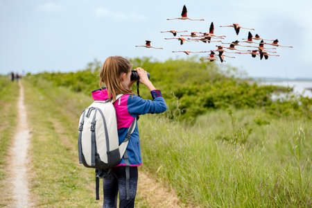 Young girl watching flamingos in flight through binoculars against the background of the nature. Observation of birds. Birdwatching Banco de Imagens