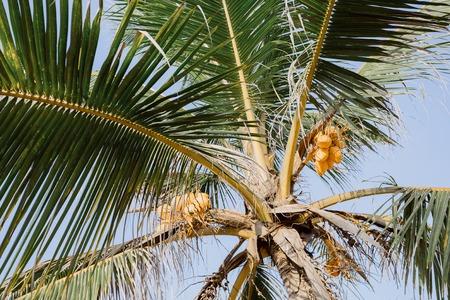 Beautiful sunset, palms beach.