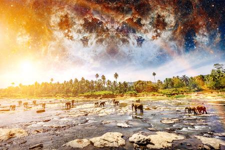 Elefantes en el río. Colorido paisaje místico. Mundo de la belleza Sri Lanka. Elementos de esta imagen proporcionada por la NASA.