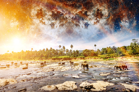Elephants on the river. Colorful mystic landscape. Beauty world. Sri Lanka. Elements of this image furnished by NASA. Stock Photo