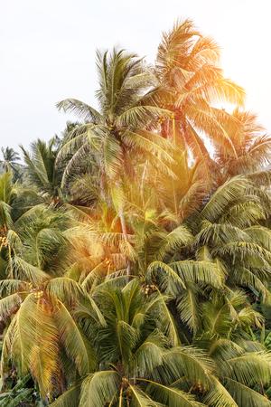 아름다운 풍경, 열대 팜 비치 스톡 콘텐츠