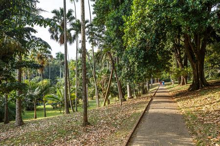 tropica: Beautiful tropica nature. Peradeniya. Sri Lanka.