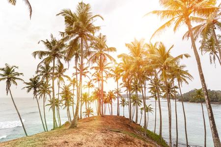 Palm tropical sunset. Mirissa Beach. Sri Lanka Stock Photo