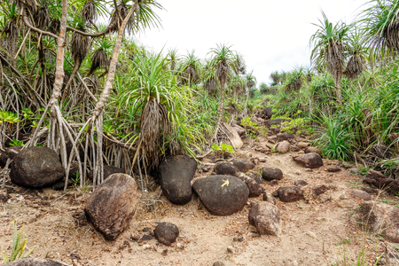 Palm tropical beach. Landscape rocky coast ocean.